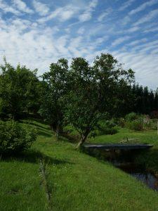 Fliethbach im Sommer